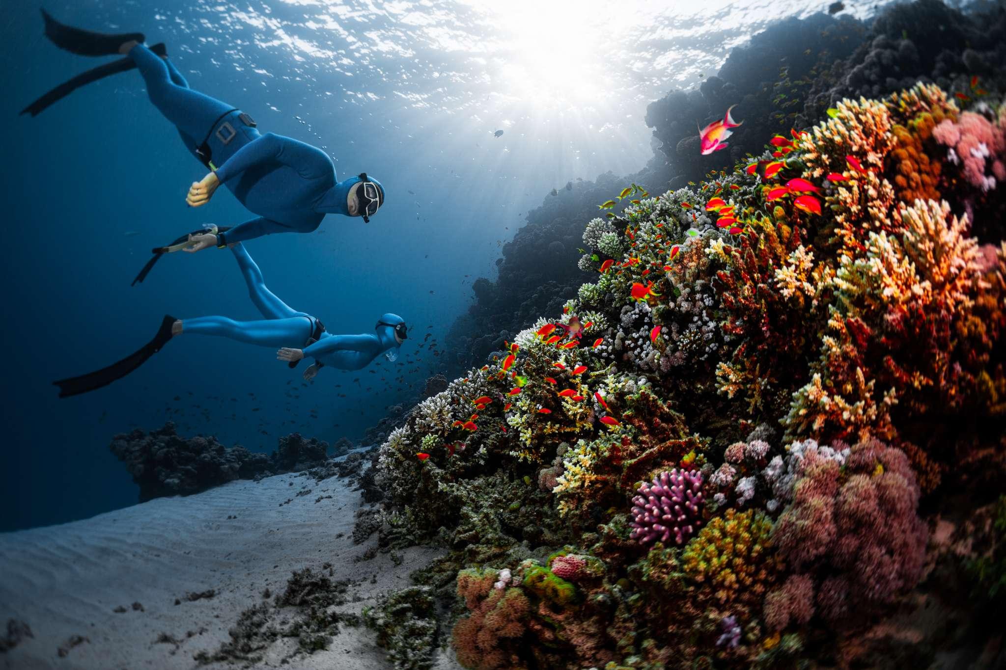 Freedive Trips Bali